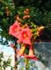 Красні квіти