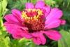 Квітка 3