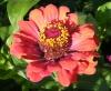 Квітка 1