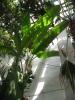 Дерева теплиці