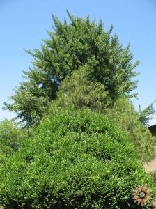 Дерева ботанічного саду