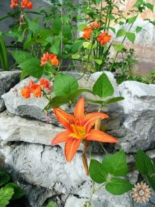 Квітка на камені